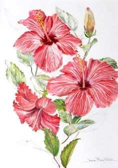 "Ruffled Hibiscus, watercolor, 31"" x 15"" © Joan Berg Victor, 2011"