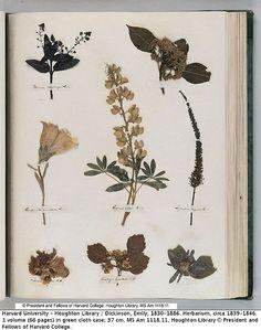 herbario emily dikinson - de búsqueda