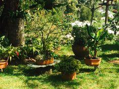 Plants, Eye Brows, Plant, Planting, Planets