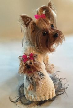 There isn't any other breed like the Yorkie!!