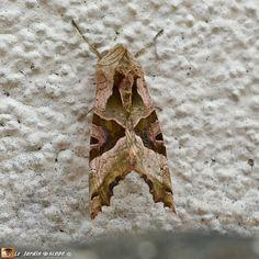 Un Papillon En Treillis De Camouflage Papillon Papillon De