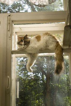 Gato na janela…