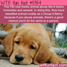 WTF Facts : funny, interesting & weird facts — The FBI now tracks animal abuse - WTF fun facts