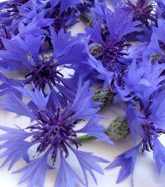 Fiordaliso significa delicatezza. #fiori #significati
