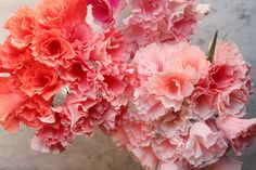 http://www.cartefini.com/blogs/latest-news/15200061-crepe-paper-godetia-and-bougainvillea