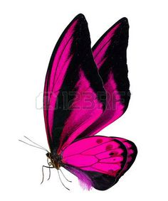 Purple Butterfly Tattoo, Butterfly Tattoos Images, Butterfly Background, Butterfly Clip Art, Butterfly Quilt, Butterfly Drawing, Butterfly Pictures, Butterfly Painting, Butterfly Watercolor