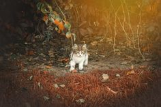 kitten in autumn #istanbul #turkey