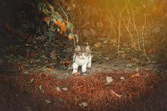kitten in autumn #istanbul #turkey