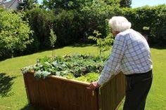 A magaságyban minden növény megtalálja kedvező életfeltételeit, tehát a termelőnek kell eldöntenie, hogy mit kíván termeszteni. Garden Park, Outdoor Furniture, Outdoor Decor, Garden Projects, Container Gardening, Pergola, Home And Garden, Minden, Flowers