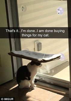 'That's it... I'm done... I am done buying things for my cat'...