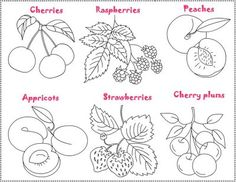 free coloring pages fruit salad salade de fruits coloring and crafting