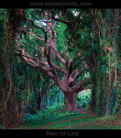 Tree of Life - Maui, HI, USA