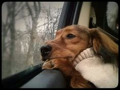 Awwwww so cute***Love them car rides, can't hardly get them out sometimes!***