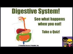 Promoting Success: Digestive Body System Functions for Science Kids in Middle School