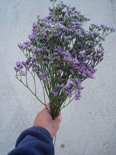 Accent Flower: Limonium-Maine Blue