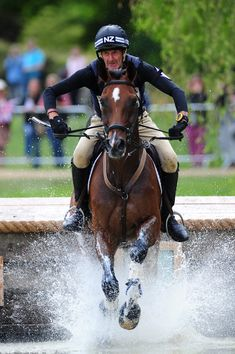 The Hanoverian was once a carriage horse, but breeders employed Thoroughbred bloodlines to lighten the horse's frame. Today, Hanoverians like Campino make excellent jumpers, dressage horses, and eventers.