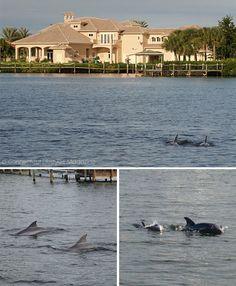 Spend a Weekend in Cocoa Beach, Florida - dolphin cruise Melbourne Melbourne Beach Florida, Cocoa Beach Florida, Florida Springs, Florida Camping, Florida Vacation, Florida Travel, Cruise Florida, Places In Florida, Florida Beaches