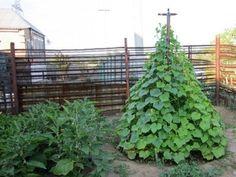 Огуречная пирамида – повышенная урожайность при минимальном расходе огорода | Дачный каприз | Яндекс Дзен
