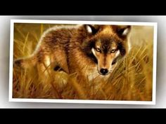 ▶ Sound Of The Wolves - Music and Nature Sounds For Relaxation - YouTube