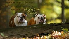 Bulldogs and Pooh Quotes