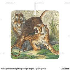 Vintage Fierce Fighting Bengal Tigers Grass