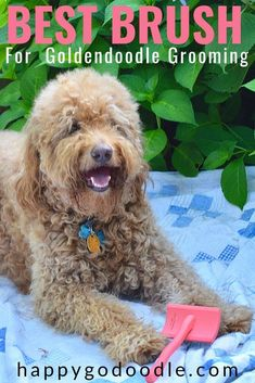 What's the best brush for Goldendoodle grooming? Here's the on the best brush that glides through Goldendoodle hair like a knife through butter. Goldendoodle Haircuts, Goldendoodle Grooming, Dog Care Tips, Pet Care, Pet Tips, Puppy Cut, Dog Grooming Tips, Best Brushes, Doodle Dog