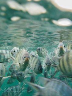 underwater fishes on seychelles