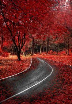 Red Autumn in Guadalajara, Castilla-La Mancha, Spain