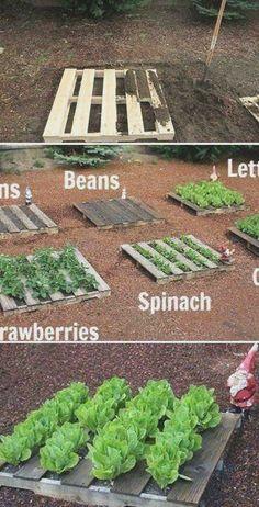Garden Cottage, Garden Beds, Garden Art, Rocks Garden, Backyard Cottage, Garden Pond, Night Garden, Beer Garden, Terrace Garden