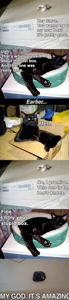 Because cats. - Imgur