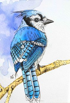 Watercolor Blue Jay / watercolor and pen / watercolor bird / bird art www.kberriganart.com