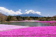 Mt. Fuji, Japan.