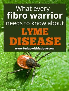 What every fibro warrior needs to know about Lyme disease | Fed Up with Fatigue