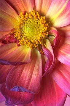 ~~Dahlia by Robert Jensen~~