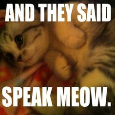 Meredith<<<OMG!!! This so hilarious and adorable it's like asdfghjkl!!!