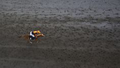 Nice aerial shot from Laytown Strand Races, Ireland. Racehorse, Horse Racing, Ireland, Horses, In This Moment, Passion, Sea, Sayings