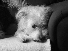 Daisy being a cute pupper