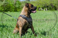 Adjustable Studded #Leather #Dog #Harness for Walking and Training - $79.90 | www.fordogtrainers.com