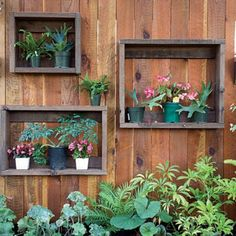 Potted plants in wooden frames attached to the garden fence. Good use of space and eye catching!