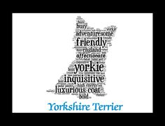 Traits of the Yorkshire Terrier The Yorkshire Terrier originated as a ratter belonging to the working class. Because of its mode roots, the Yorkshire Terrier was initially looked down upon by the weal