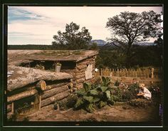 Garden adjacent to the dugout home of Jack Whinery, homesteader, Pie Town, New Mexico