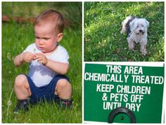 It's well known that the types of chemicals routinely sprayed on lawns are a potential [...]