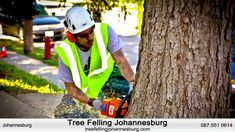 Looking to find recommended tree fellers in Johannesburg? Our friendly licensed contractors offer emergency and maintenance tree cutting services for all pro. Tree Cutting Service, Tree Felling, Contractors License, Pressure Washing, Air Pollution, Gta, Dallas, Restoration, Film