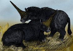 Elasmotherines, thought to be the prehistoric basis for unicorn legends. Snopes article