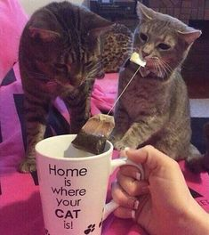Funny pictures about Home For Cat People. Oh, and cool pics about Home For Cat People. Also, Home For Cat People photos. I Love Cats, Crazy Cats, Cute Cats, Funny Cats, Funny Animals, Cute Animals, Animals Images, Farm Animals, Kittens Cutest