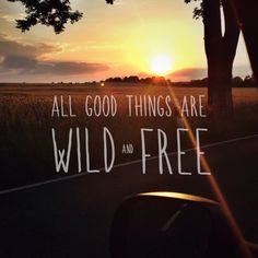 All good things are wild and free. We have the best road trip inspiration for you! Get inspired now!