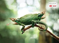 3M Scotch Double Sided Tape: Chameleon