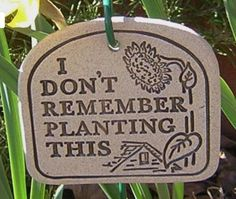 I don't remember planting this!