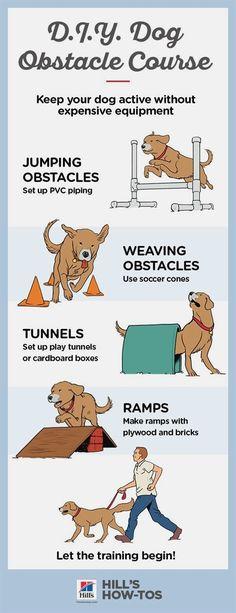 dog agility course diy how to build ; dog agility course diy how to make ; Agility Training For Dogs, Dog Training Tips, Training Classes, Training Pads, Potty Training, Training Online, Training Videos, Agility Course For Dogs, Dog Training Equipment