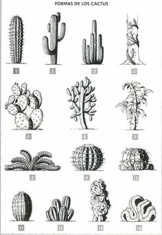 Formas de los cactus Se puede establecer diferentes tipos de cactus según su si… Cactus shapes Depending on the silhouette, different types of cacti can be found, and this is also a simple way … Cactus Types, Cactus Tattoo, Cactus Drawing, Botanical Illustration, Cactus Illustration, Future Tattoos, Art Inspo, I Tattoo, Body Art